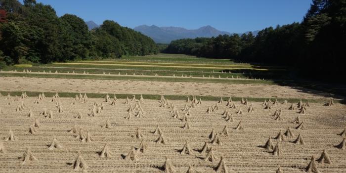リレーコラムVol.2 長野に戻り感じている、農業のシステム化